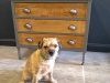 Painted Oak Chest of Drawers Suffolk 1